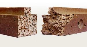 carcoma en madera